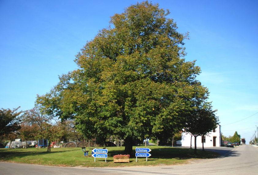 Presgaux arbre