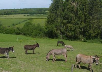 Aux pas de l'âne