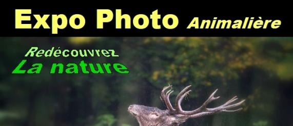 Expo photo animalière : « Immersion nature »
