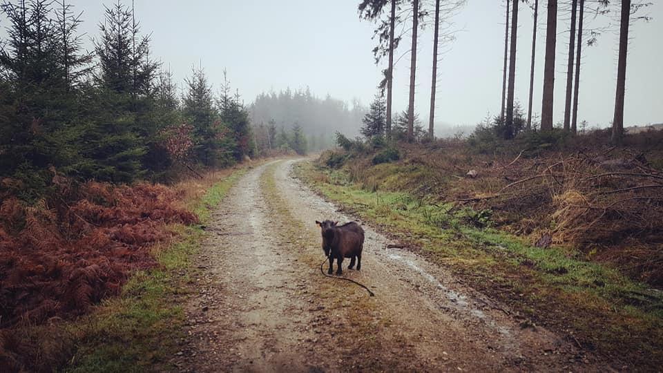 Paysage rural avec mouton