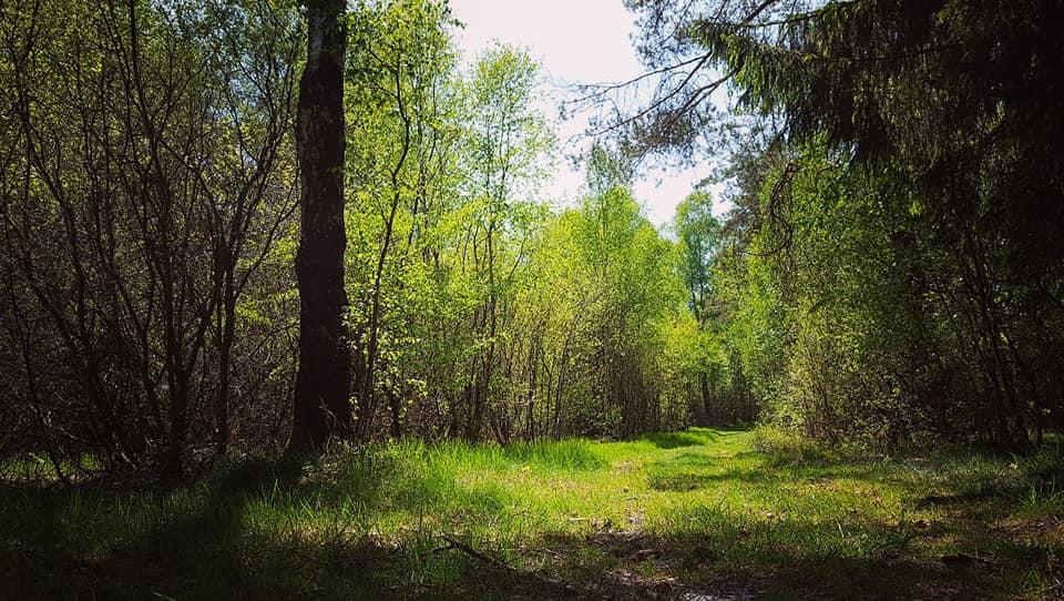 Amande - forêt