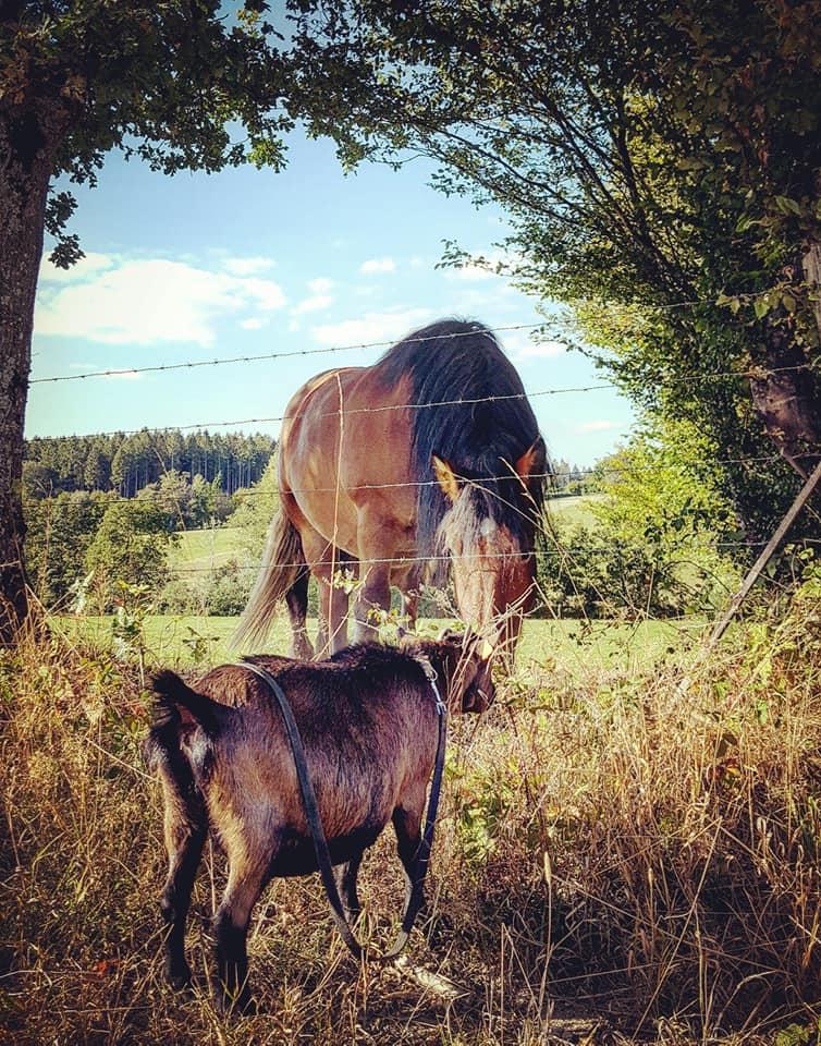 Amande -cheval