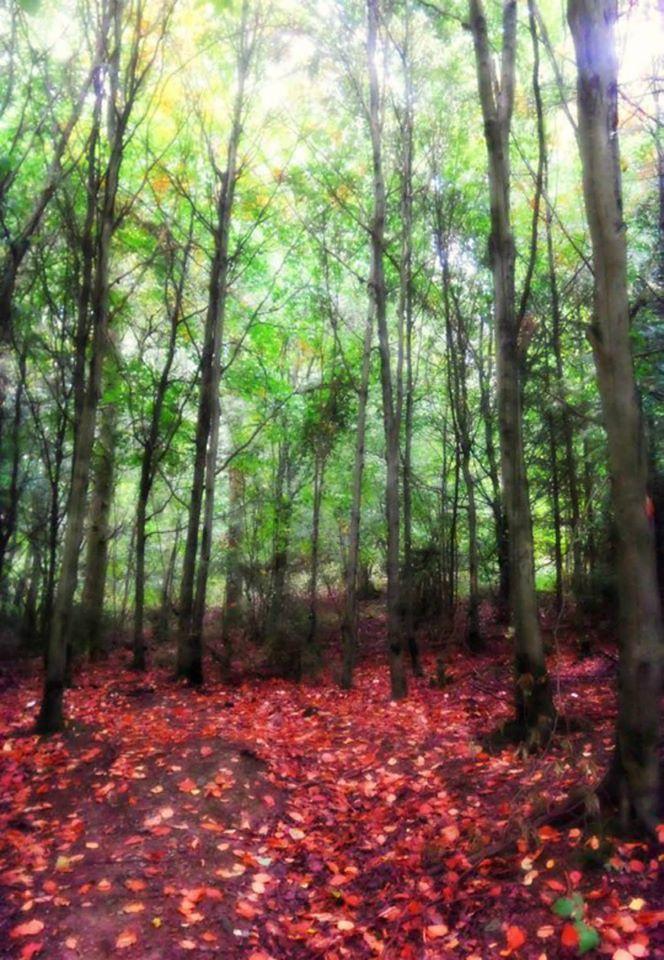 Forêt et feuilles mortes