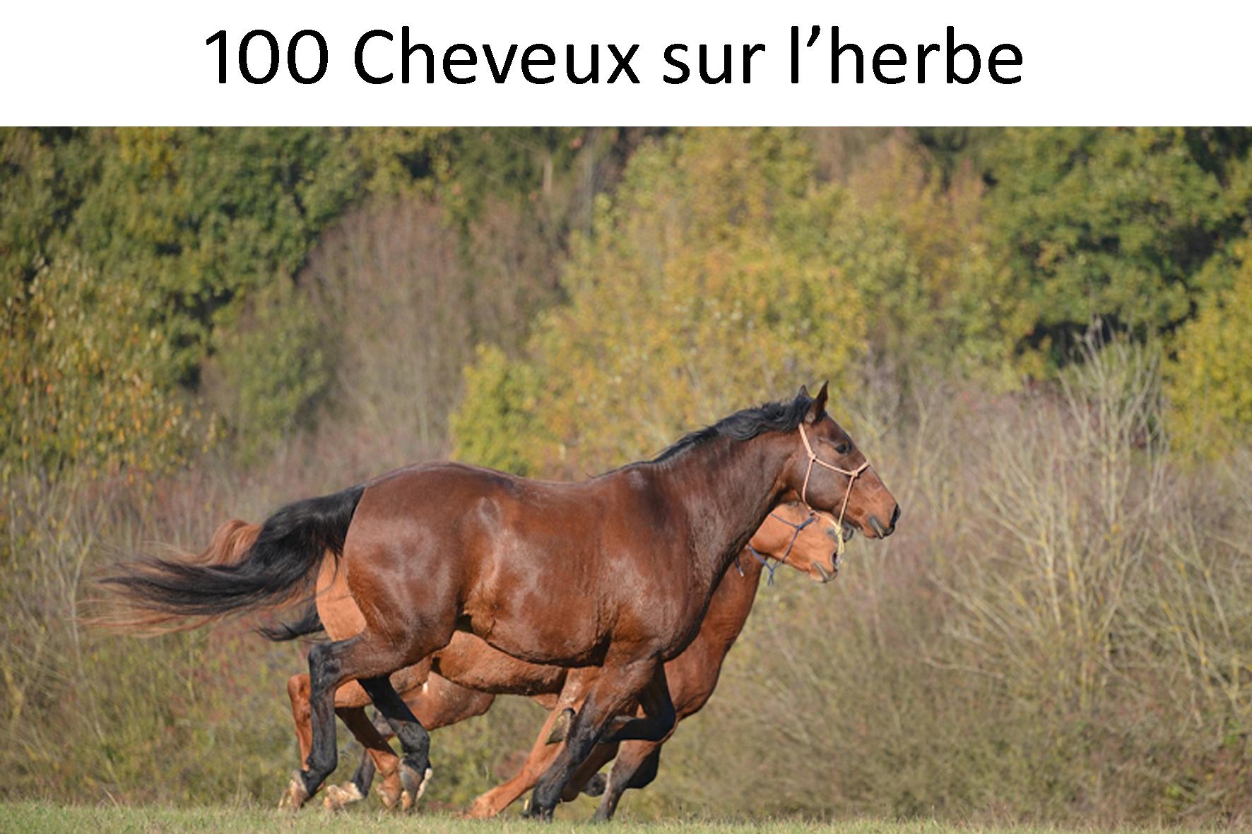 100 chevaux sur l'herbe